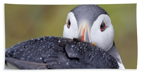 Atlantic Puffin With Rain Drops Bath Towel