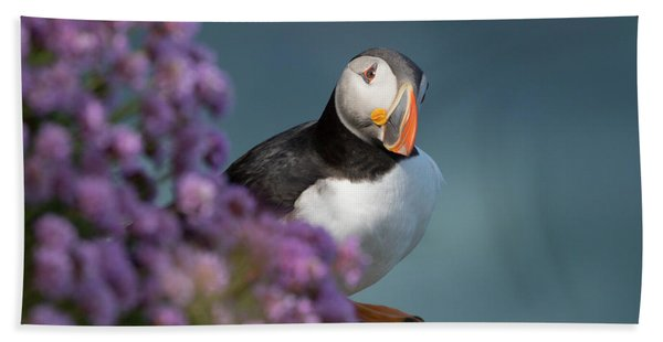Atlantic Puffin - Scottish Highlands Hand Towel
