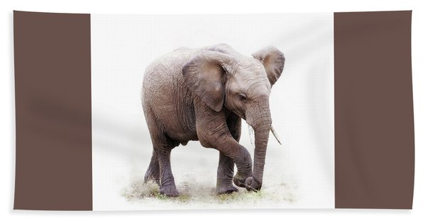 Baby African Elephant Isolated On White Hand Towel