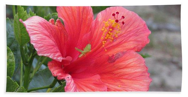 Baby Grasshopper On Hibiscus Flower Hand Towel