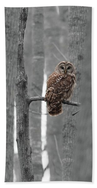 Barred Owl In Winter Woods #1 Hand Towel