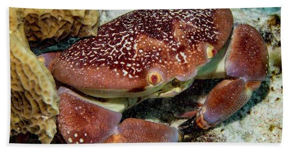 Batwing Coral Crab Hand Towel