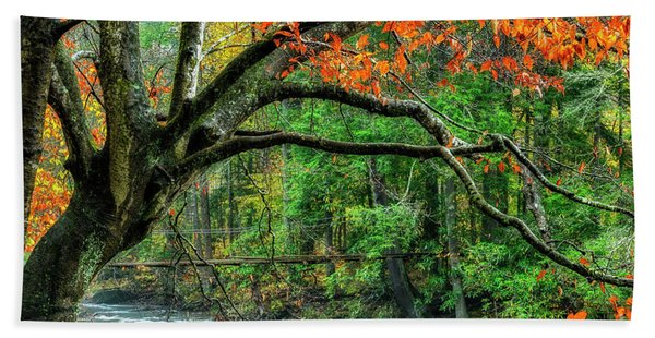 Beech Tree And Swinging Bridge Hand Towel