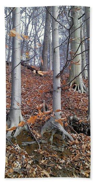 Beech Trees Hand Towel