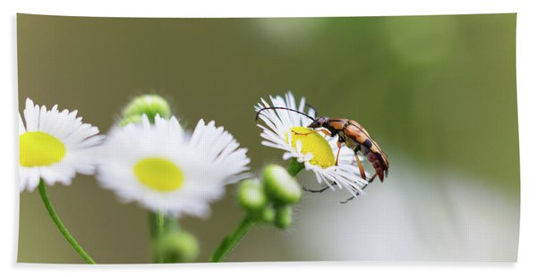 Beetle Daisy Hand Towel