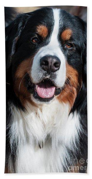 Bernese Mountain Dog Portrait  Hand Towel