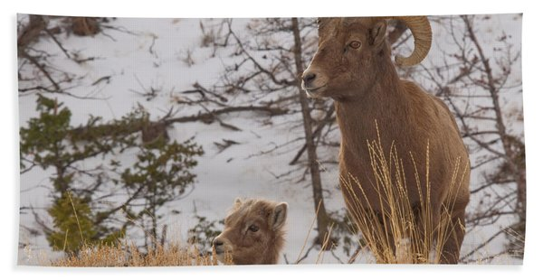 Bighorn Ram And Kid Bath Towel