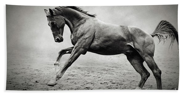 Black Horse In Dust Hand Towel