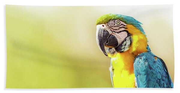 Blue And Yellow Macaw With Copy Space Hand Towel