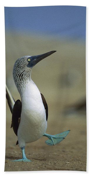 Blue-footed Booby Sula Nebouxii Bath Towel