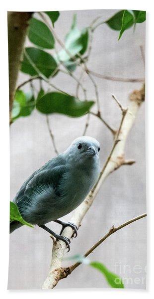 Blue-grey Tanager 2 Bath Towel