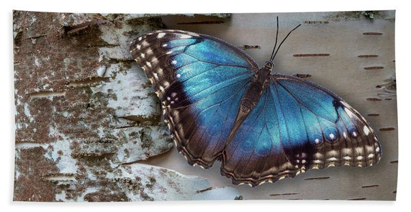 Bath Towel featuring the photograph Blue Morpho Butterfly On White Birch Bark by Patti Deters