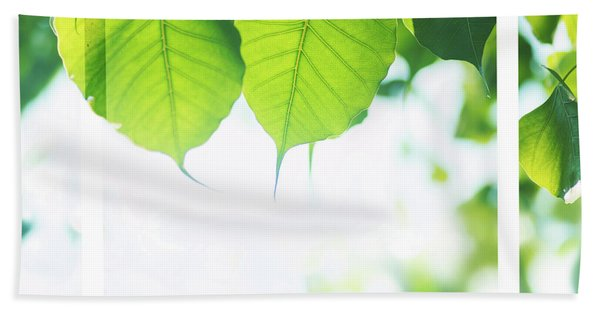Bodhi Leaves With White Frame Hand Towel
