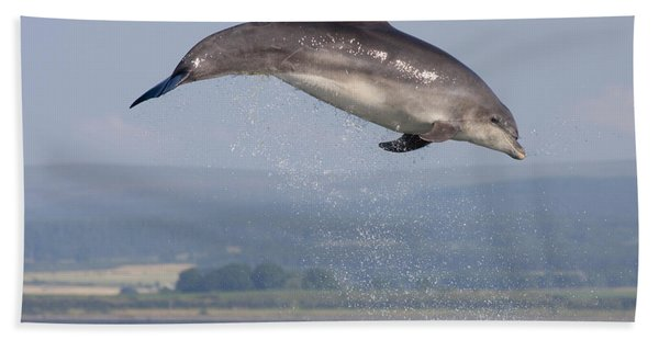 Bottlenose Dolphin - Scotland #3 Hand Towel