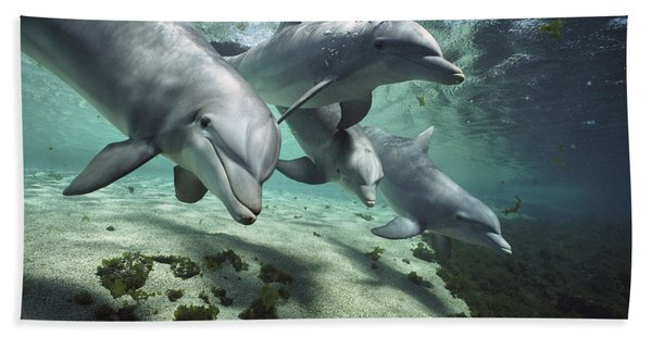 Four Bottlenose Dolphins Hawaii Bath Towel