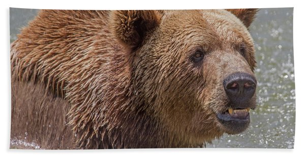 Bath Towel featuring the photograph Brown Bear 10 by Larry Linton