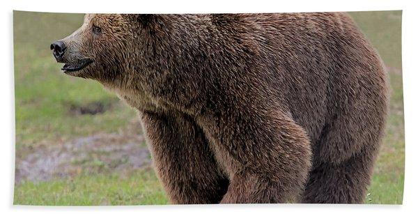 Brown Bear 14.5 Hand Towel