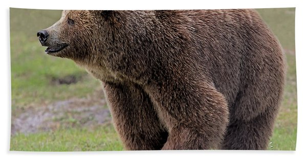 Bath Towel featuring the digital art Brown Bear 14.5 by Larry Linton