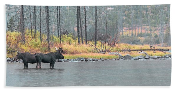Bull And Cow Moose In East Rosebud Lake Montana Bath Towel