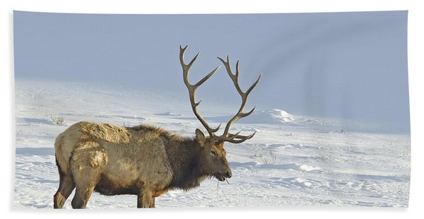 Bull Elk In Snow Bath Towel