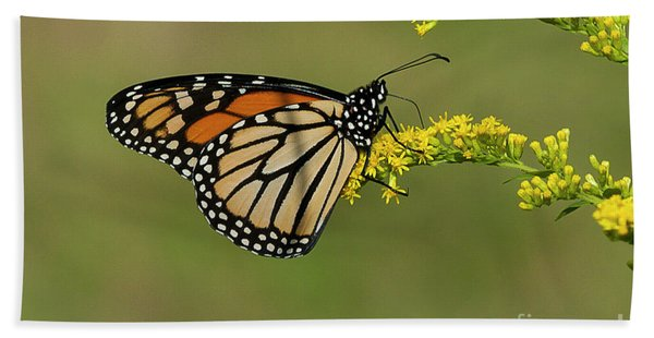 Butterfly On Flowers Hand Towel