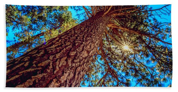 Giant Sequoia Trees II Bath Towel
