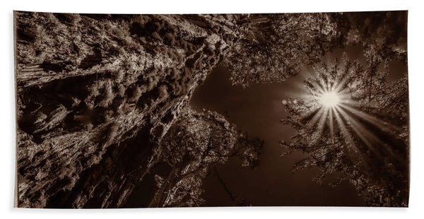 Giant Sequoia Trees I Monochrome Bath Towel
