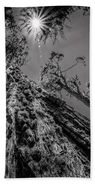 Calaveras Big Trees State Park Monochrome Bath Towel