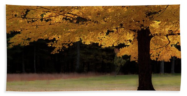 Canopy Of Autumn Gold Hand Towel