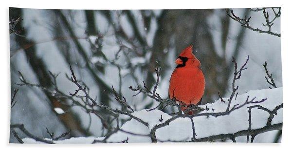 Cardinal And Snow Hand Towel
