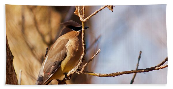Cedar Waxwing In Autumn Hand Towel