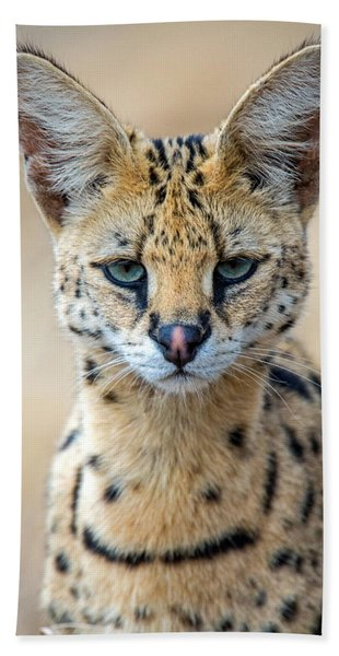 Close-up Of Serval Leptailurus Serval Hand Towel