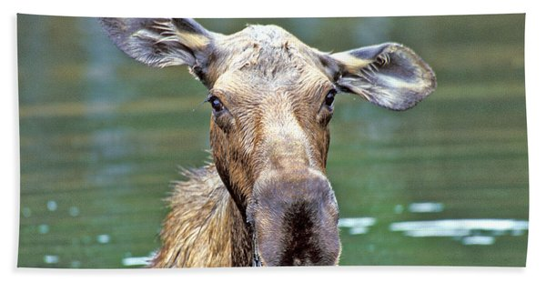 Close Wet Moose Bath Towel