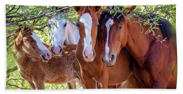 Closeup Of Herd Of Four Wild Horses Hand Towel