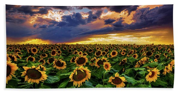 Hand Towel featuring the photograph Colorado Sunflowers At Sunset by John De Bord