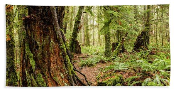 Comox Valley Forrest-3 Hand Towel