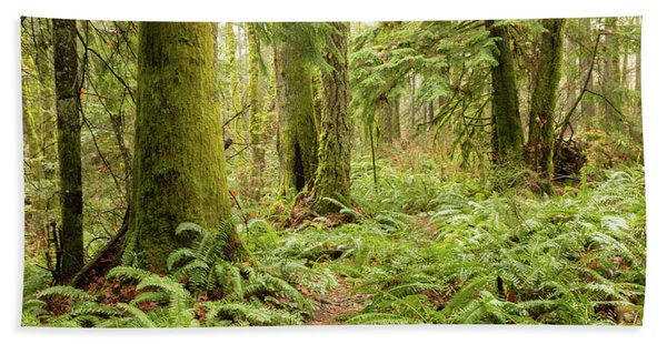 Comox Valley Forrest-5 Hand Towel