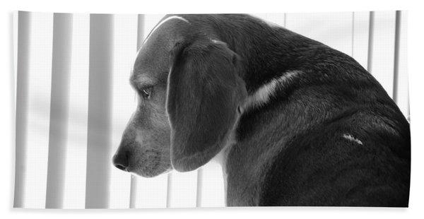 Contemplative Beagle Bath Towel