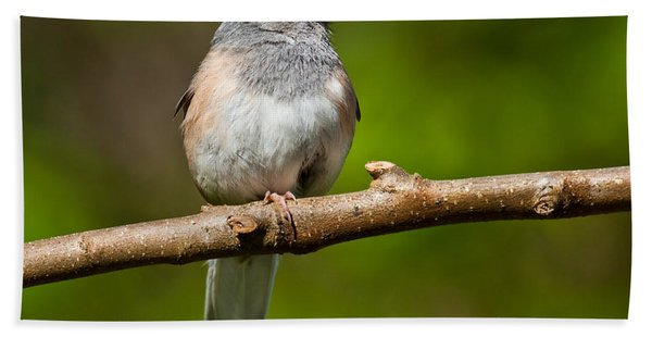 Dark Eyed Junco Perched On A Branch Hand Towel