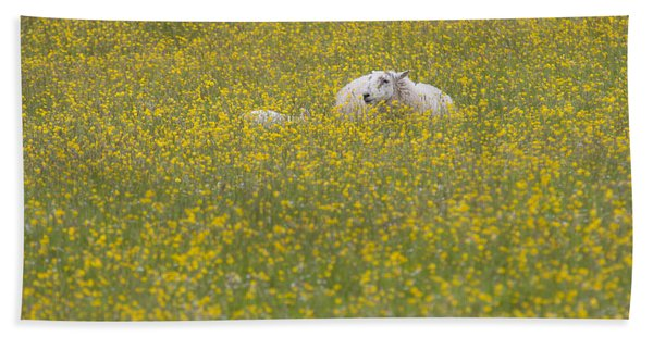 Do Ewe Like Buttercups? Hand Towel