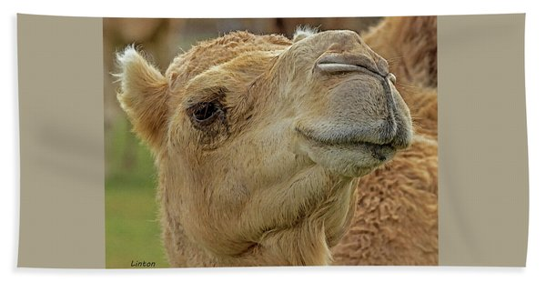 Bath Towel featuring the digital art Dromedary Or Arabian Camel by Larry Linton