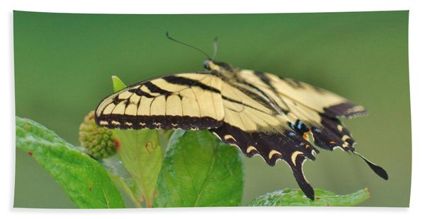 Eastern Tiger Swallowtail Hand Towel