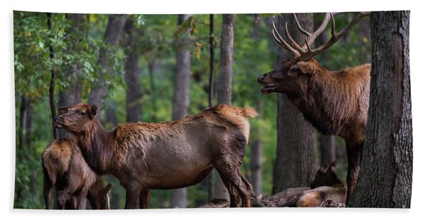 Elk Romance Hand Towel