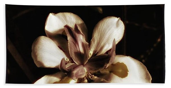 Bath Towel featuring the photograph Fairy Iris. A Butterfly Landed On My by Mr Photojimsf