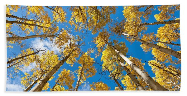 Fall Colored Aspens In The Inner Basin Hand Towel