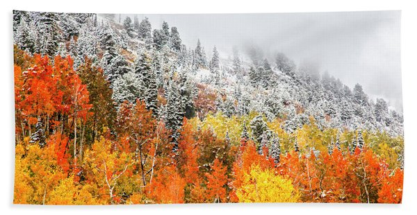 Fall To Winter Canvas Print, Photographic Print, Art Print, Framed Print, Greeting Card, Iphone Case Hand Towel