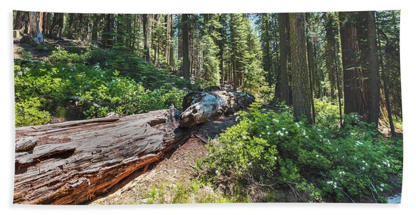 Fallen Tree- Bath Towel