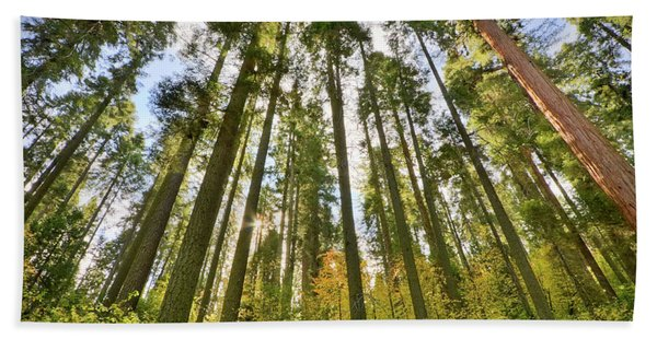 Forest Of Light Bath Towel