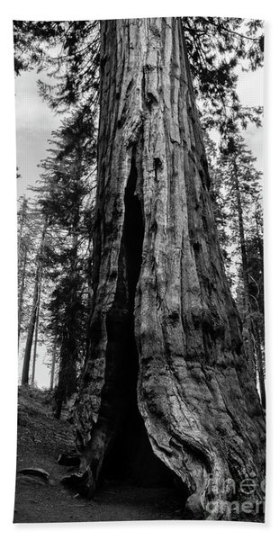 Giant Sequoia At Mariposa Grove Bw Bath Towel