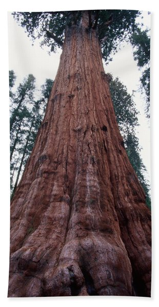 Giant Sequoia - General Grant Grove Bath Towel